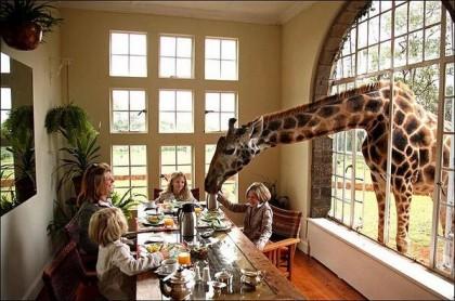 Giraffe_2_1.jpg